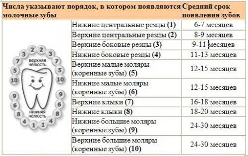 Схема роста зубов у ребенка.